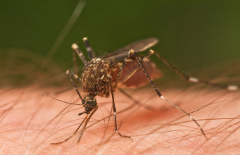 Mosquito Borne Disease Prevention